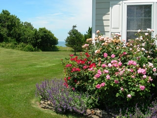 harveys-cottage-garden